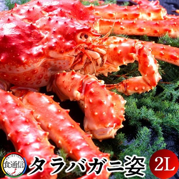 たらばがに ボイルたらばがに姿 1尾(2kg〜2.4kg)2L タラバガニ 本たらば 蟹姿