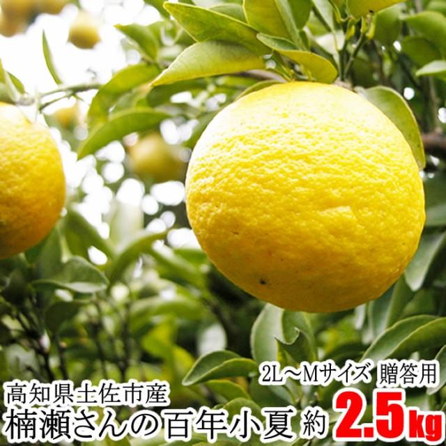 贈答用 楠瀬さん 百年小夏 2L〜Mサイズ 約2.5...