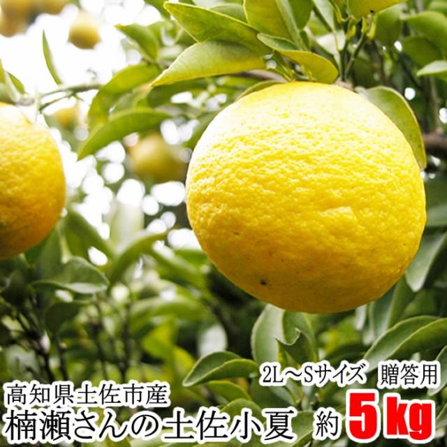 贈答用 楠瀬さん 土佐小夏 2L〜Sサイズ 約5kg...