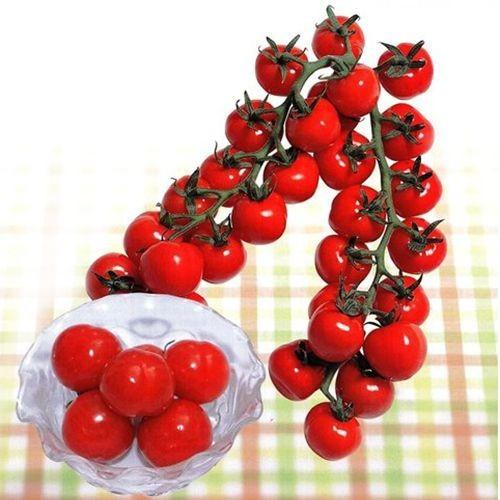 ミニトマトの種 CFプチぷよ キダネ100粒