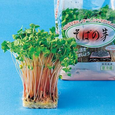 スプラウトの種 そばの芽 の種 小袋 約60ml