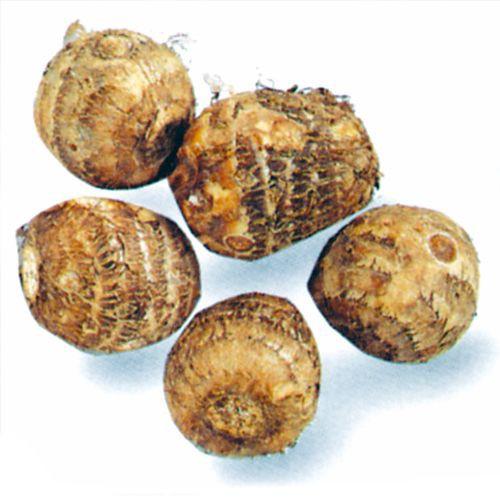 里芋(さといも) 予約 石川早生 種芋 1kg(15〜2...