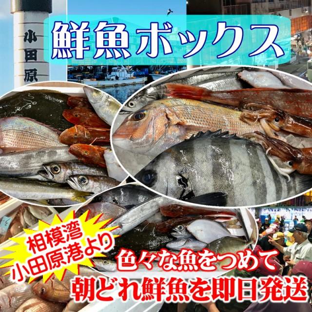 鮮魚セット 小田原 朝獲れ 鮮魚ボックス 3kg 【そ...
