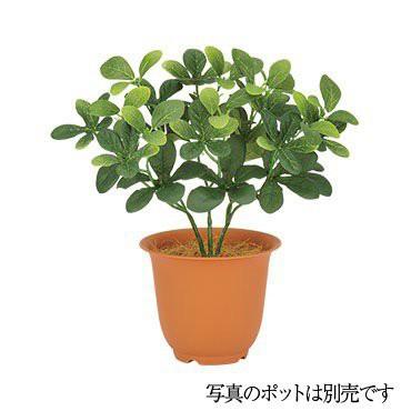 【人工観葉植物】トベラブッシュ 28cm 【観葉植物...
