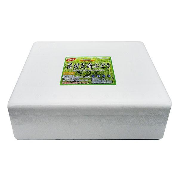 茎付き海ぶどう480g×1箱セット沖縄産 粒小さめ...