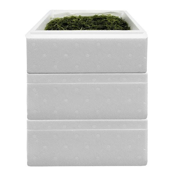 茎付き海ぶどう480g×3箱セット沖縄産 粒小さめの...