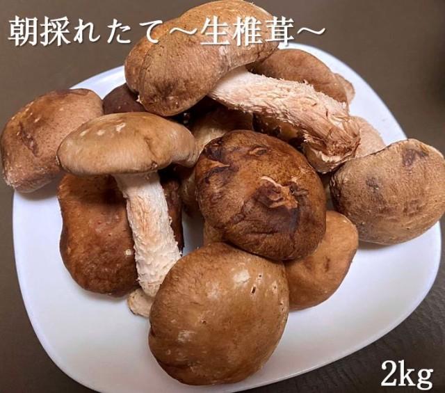 訳あり 無選別 生椎茸 2キロ 送料無料 肉厚 菌床...