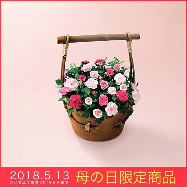 母の日 ギフト ミニバラ 鉢植え スイートハート...