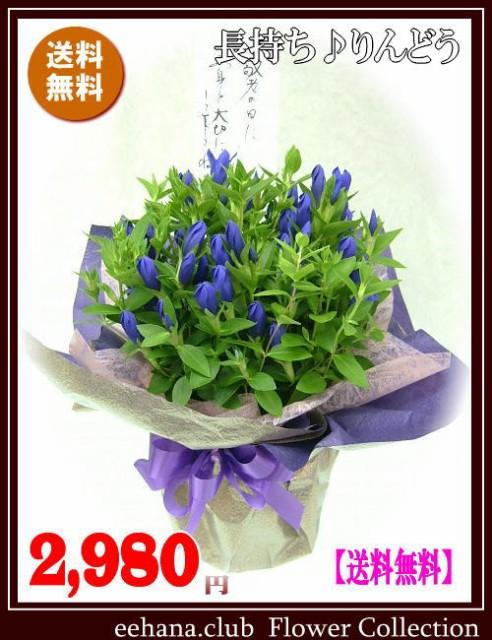今だけ2,980円 「送料無料」売れてます!敬老の日...