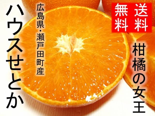 ご予約【2月上旬頃発送】【送料無料】 ハウス(温...
