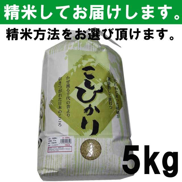 【平成30年度産】 丹波篠山こしひかり 一等玄米1...