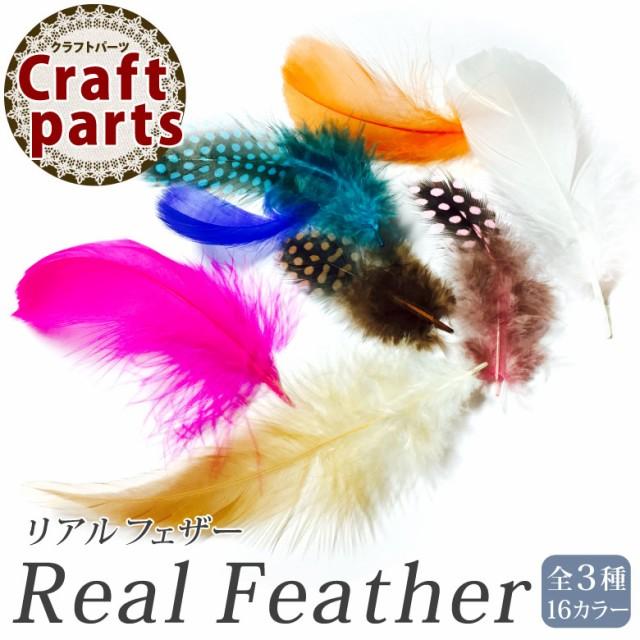 リアルフェザー 全3種 6枚入【グース/ホロホロ鳥...