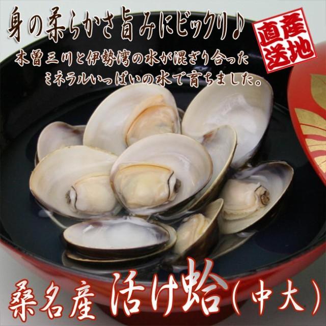 【送料無料】ハマグリ【中大】1kg 三重県桑名産 ...