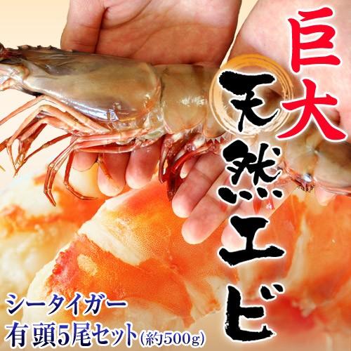 最大級の天然えび シータイガー 有頭5尾 約500g ...