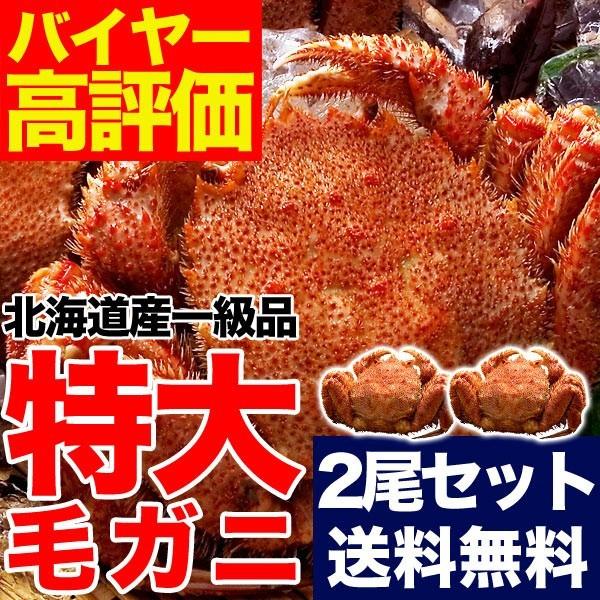 豪華特大毛ガニ約570g2尾セット(合計約1.1kg)【送...