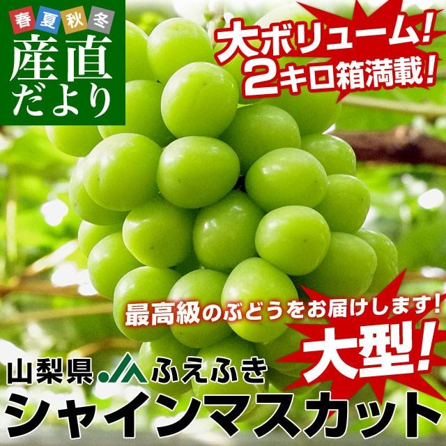 送料無料 山梨県より産地直送 JAふえふき 大型...