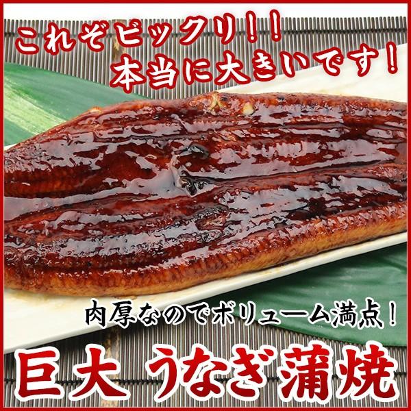 送料無料 巨大 うなぎ蒲焼 1尾おおよそ400g /...