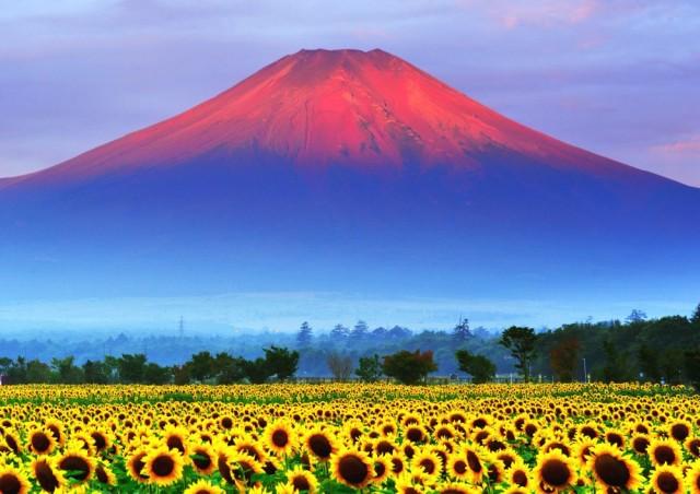 絵画風 壁紙ポスター 赤富士 朝焼けの富士山と向...