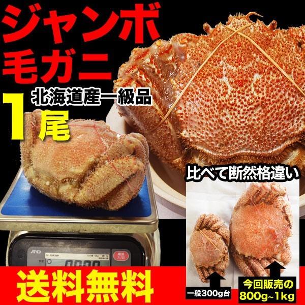 ジャンボ毛ガニ1尾(約800g〜1kg前後)【送料無料】...