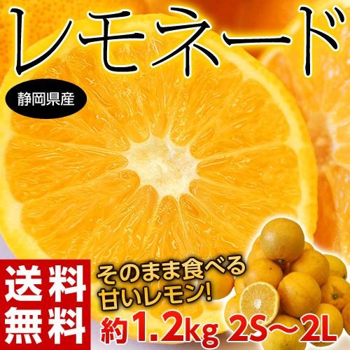柑橘 静岡県産 レモネード 約1.2キロ 2S〜2Lサイ...