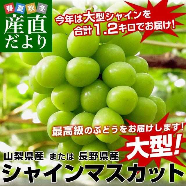 山梨県または長野県産 シャインマスカット 1.2キロ (2房から3房入り) 送料無料 ぶどう 葡萄