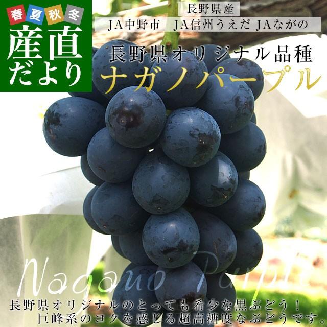長野県産 ナガノパープル 合計1.2キロ(2房から3房...