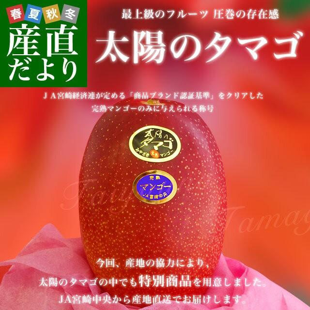 宮崎県より産地直送 JA宮崎中央 完熟マンゴー 太...