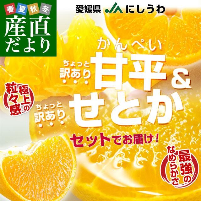愛媛県より産地直送 JAにしうわ 甘平&せとかセッ...