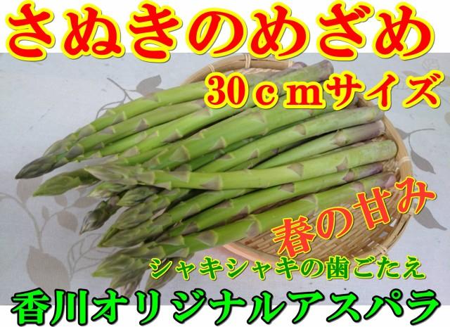 さぬきのめざめ【30cm】香川県産、根元までやわら...