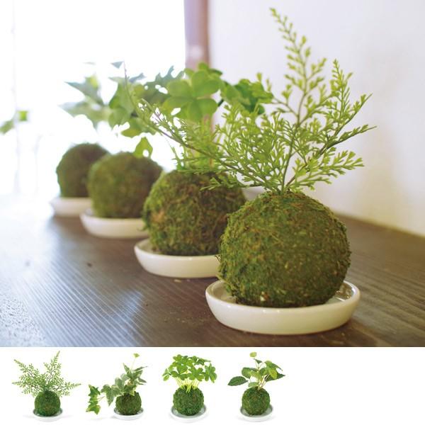 人工観葉植物 WA BONSAI ARTIFICIAL GREEN ( 造...