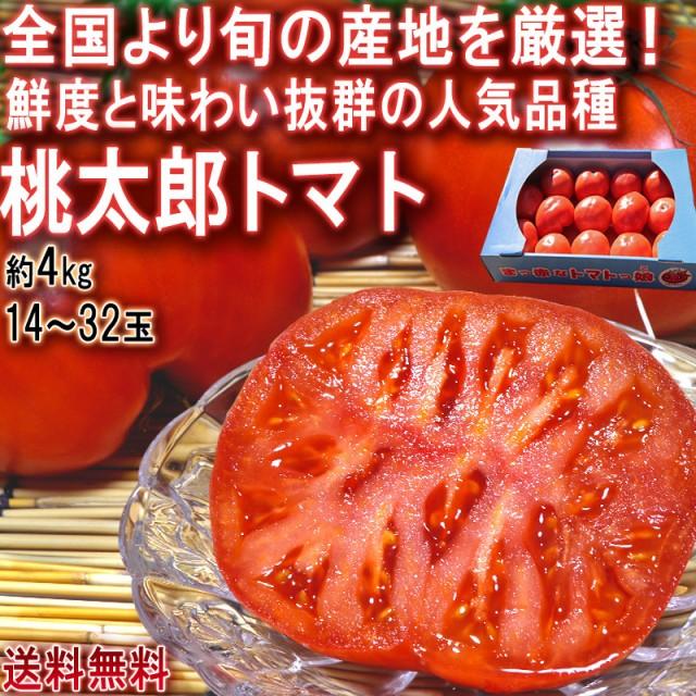 桃太郎トマト 約4kg 14〜32玉 訳あり 千葉県産中心 産地厳選 家庭用のお得なトマト!旬の産地で育成した新鮮な野菜