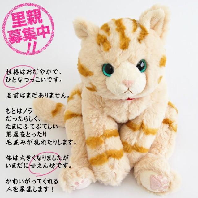 猫 ぬいぐるみ 電報 癒しグッズ 健康 サプリメン...