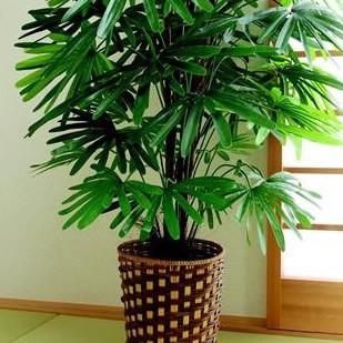 お手軽観葉植物 (人工観葉植物) 観音竹