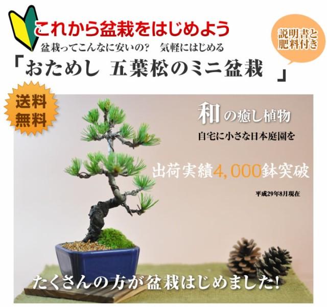 【ミニ盆栽 趣味 定年 お祝い 贈り物 プレゼント ...