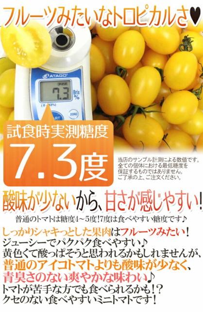 """愛知県産 """"イエローアイコトマト"""" 約1kg 秀品【予約 11月下旬以降】"""