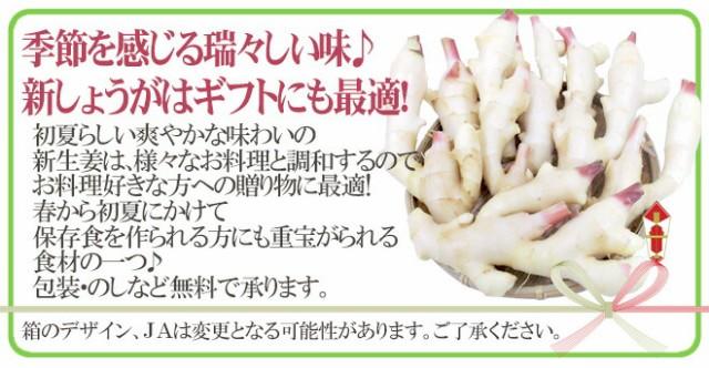 """【送料無料】和歌山県産 """"新しょうが"""" 秀品 Lサイズ 約4kg【予約 6月下旬以降】"""