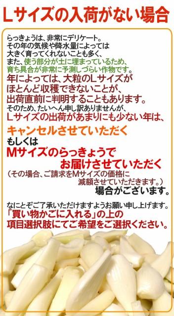 """徳島 鳴門産 """"洗いらっきょう"""" 約1kg Lサイズ【予約 5月下旬以降】"""