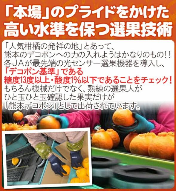 """【送料無料】熊本産 """"デコポン"""" 秀・優品 15~24玉 約5kg【予約 1月以降】"""