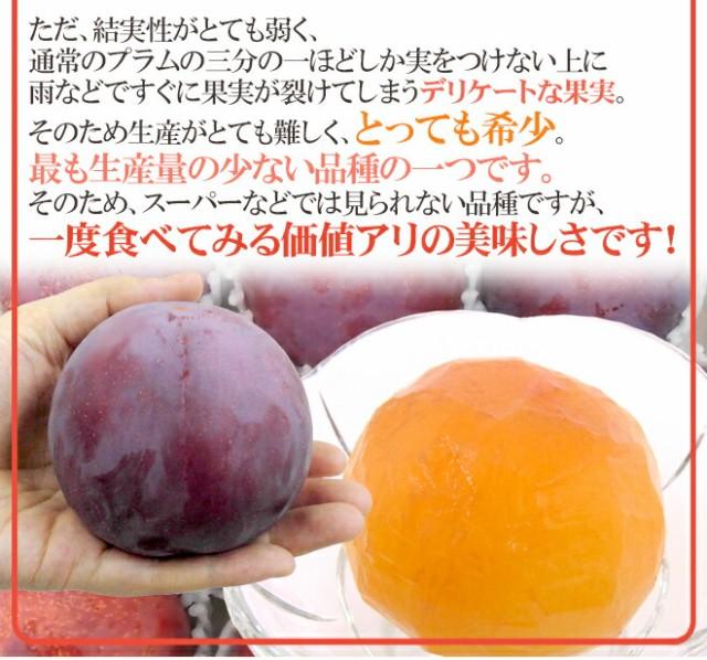 """山梨・長野産 """"貴陽プラム"""" 6~10玉 約1kg【予約 7月下旬~8月】"""