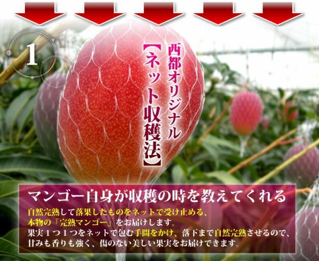 マンゴー 宮崎マンゴー 完熟マンゴー特大3L玉(450以上) JA西都協賛光センサー完全選果 ポイント5倍mango