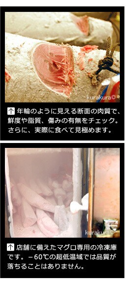 冷凍マグロの競りと専用冷凍庫