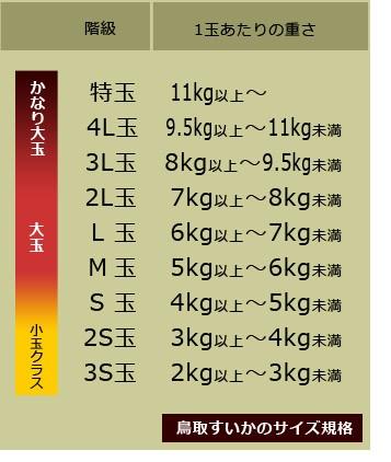 鳥取県産の大玉西瓜サイズ規格表