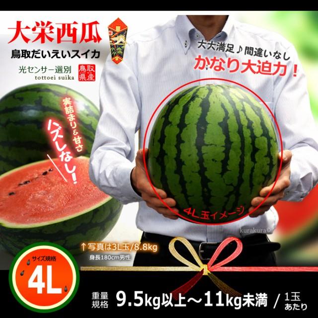 鳥取大栄スイカ大玉4L販売イメージ