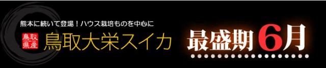 鳥取スイカ最盛期6月