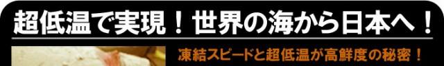 世界中のマグロが日本で美味い訳。