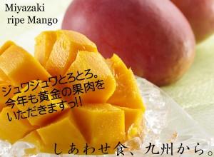 【送料無料】太陽のタマゴ(大玉3玉)最高級フルーツ宮崎の厳しい基準を乗り越えた『香り・色艶・糖度』全てがプレミアムの宮崎完熟マンゴ