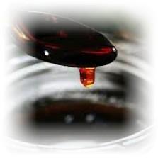 【生はちみつ】南九州のキレイな水と空気の中で育まれ採れた貴重なはちみつ 国産 非加熱 はちみつ そば蜜 大瓶 600g 健康食品