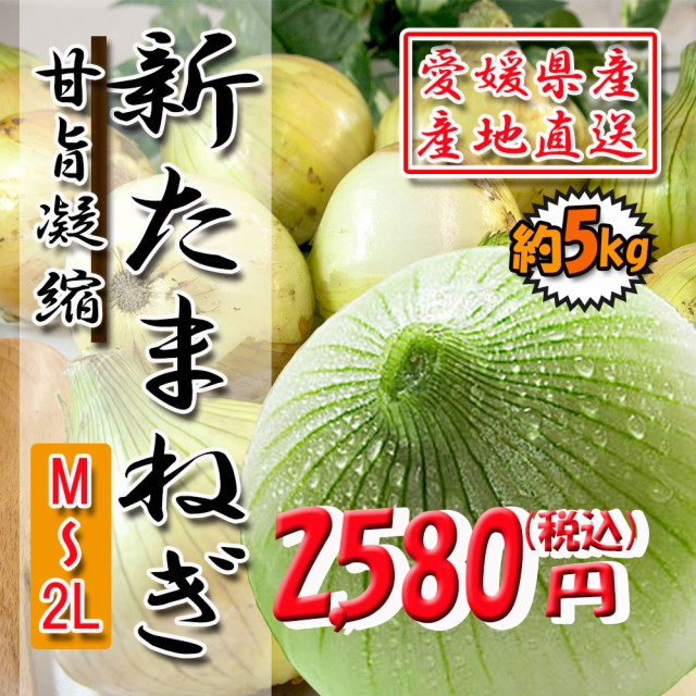 【 愛媛県産 】 新たまねぎ 旨味いっぱい 5kg 送料無料!!