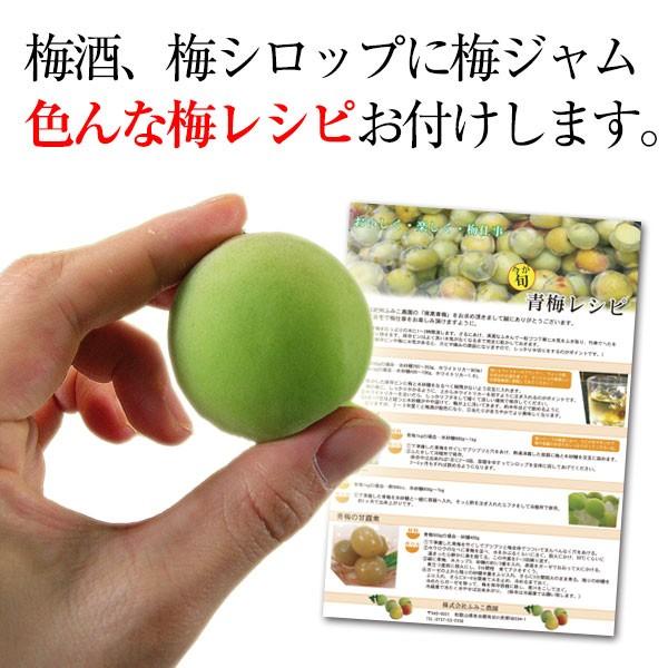 青梅(和歌山県産)南高梅の青梅3kg朝採り新鮮【2018年ご予約開始】完熟梅もございます。簡単梅レシピ&おまけ付♪