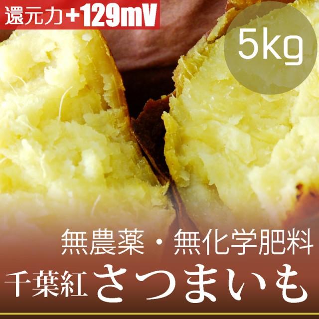 さつまいも5kg 千葉紅 無農薬・無化学肥料・千葉県産 糖度14.4% ORP+129mV